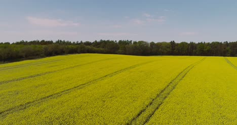 Aerial-View-Of-Rapeseed-Blooming-On-Agricultural-Field-