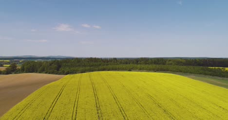 Aerial-View-Of-Rapeseed-Blooming-On-Agricultural-Field-2