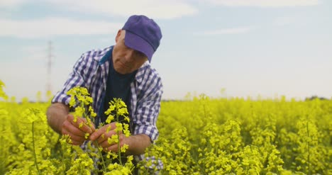 Farmer-Examining-And-Smelling-Rapeseed-Blossom-At-Field-3