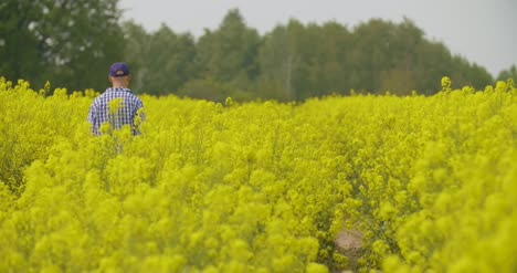 Canola-Field-Or-Rapeseed-Field-Agriculture-1
