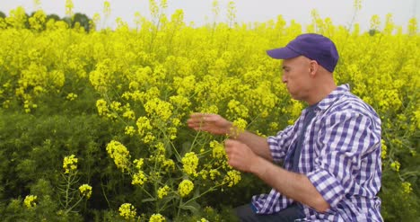 Farmer-Examining-And-Smelling-Rapeseed-Blossom-At-Field-4