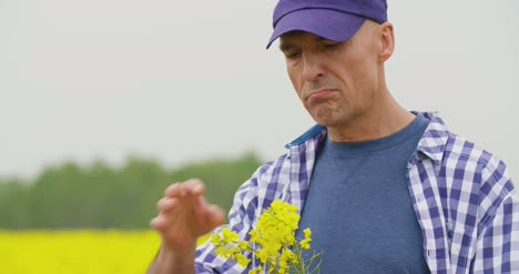 Farmer-Examining-And-Smelling-Rapeseed-Blossom-At-Field-5