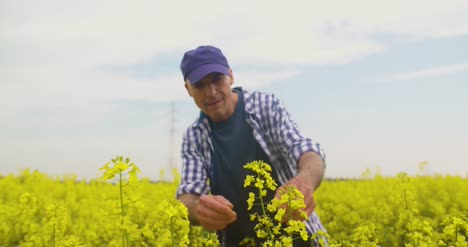 Farmer-Examining-And-Smelling-Rapeseed-Blossom-At-Field-6