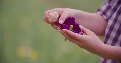 Hands-Checking-Purple-Tulip-Petals-At-Farm-3