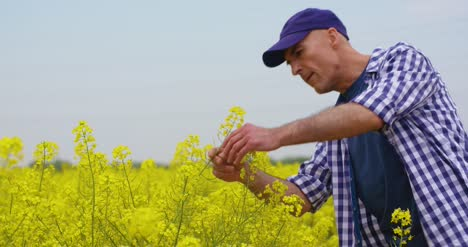 Farmer-Examining-And-Smelling-Rapeseed-Blossom-At-Field-7
