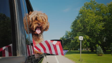 Funny-Dog-With-An-American-Flag-In-The-Paw-Looks-Out-Of-The-Car-Window