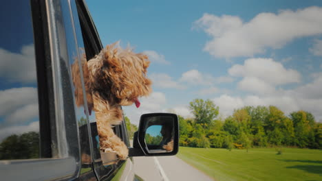 On-Vacation-With-A-Pet-Funny-Puppy-Looks-Out-The-Window-Of-The-Car