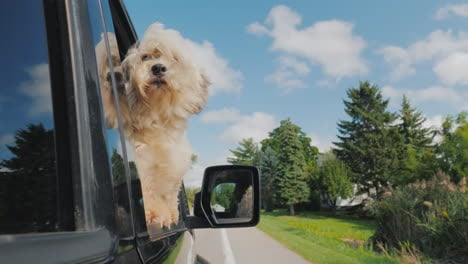 The-Dog-Looks-Out-Of-The-Window-Of-The-Car-In-Motion-In-The-Rearview-Mirror-You-Can-See-The-Driver-P