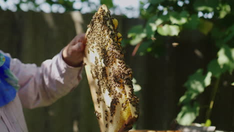 Hands-Of-The-Beekeeper-Keep-A-Frame-From-The-Hive-Learns-How-Much-Honey-Bees-Bring-4k-Video