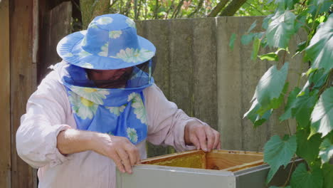 An-Elderly-Beekeeper-Working-In-An-Apiary-Near-The-Hive-4k-Video
