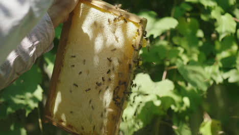 Hands-Of-The-Beekeeper-Keep-A-Frame-From-The-Hive-Learns-How-Much-Honey-Bees-Bring-Hd-Video