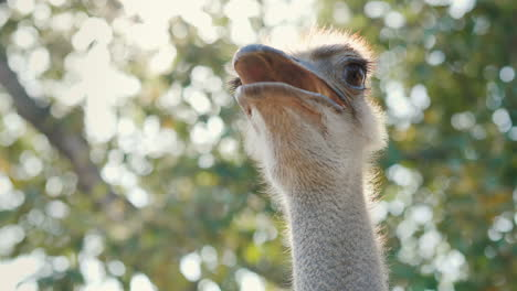 Head-And-Neck-Of-An-Ostrich-Video-With-Shallow-Depth-Of-Field-4k-Video