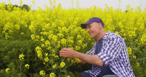 Farmer-Examining-And-Smelling-Rapeseed-Blossom-At-Field-10