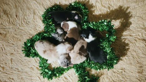 Little-Puppies-In-Green-Decoration-For-St-Patrick-s-Day