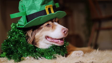 Elegant-Dog-In-The-Decoration-Of-The-Day-Of-St-Patrick-Lies-Near-The-Fireplace