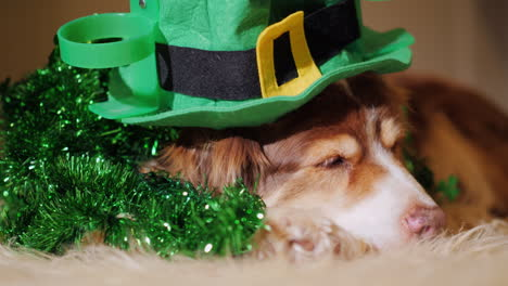 Portrait-Of-A-Cute-Shepherd-Dog-In-St-Patrick-s-Day-Decorations-One-Of-The-Most-Popular-Holidays-In-