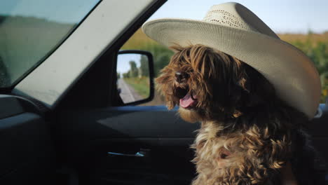A-Dog-In-A-Cowboy-Hat-Travels-In-The-Car-Next-To-The-Driver