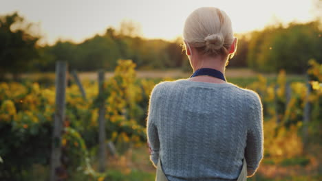 Woman-Farmer-Walking-Among-The-Rows-Of-A-Vineyard-At-Sunset-Handheld-Shot