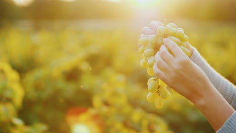 Hands-With-Crones-Of-Grapes-In-The-Rays-Of-The-Sun
