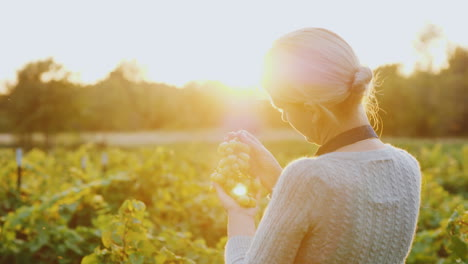 A-Woman-Farmer-Stands-In-A-Vineyard-Holding-A-Bunch-Of-Grapes-The-Setting-Sun-Beautifully-Illuminate