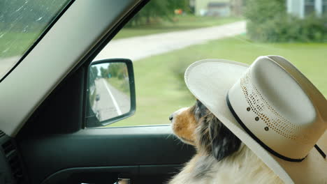 Serious-Shepherd-In-A-Hat-Rides-In-The-Car-Next-To-The-Owner