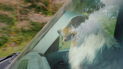 The-Dog-Travels-In-The-Car-Sits-Next-To-The-Driver-The-Windshield-Reflects-Trees