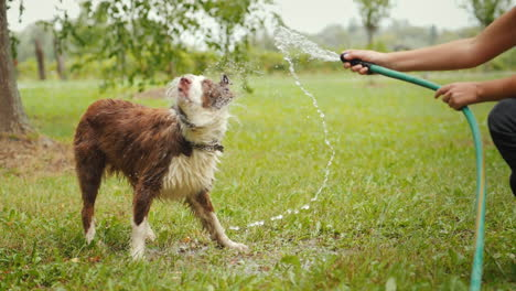 Active-Games-And-A-Healthy-Lifestyle-The-Girls-Hand-Holds-A-Water-Hose-With-Which-A-Big-Red-Shepherd