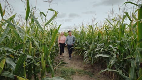 Young-Multiethnic-Couple-Walks-Through-The-Corn-Maze-Fairgrounds-And-Fun-At-Halloween-In-The-Usa