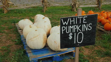 Counter-With-White-Pumpkins-Trade-At-A-Small-Agricultural-Fair