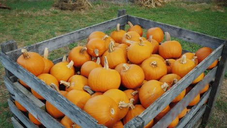 Large-Wooden-Box-With-Pumpkins-For-Halloween-Sale