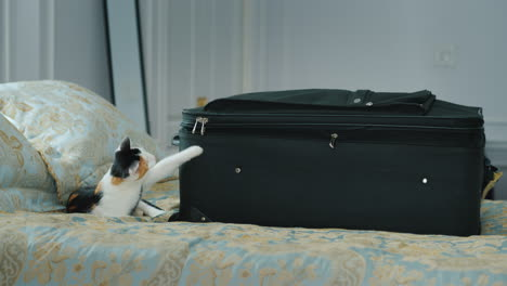 Kitten-Plays-With-A-Buckle-Travel-Suitcase-Vacation-And-Business-Trip-Concept