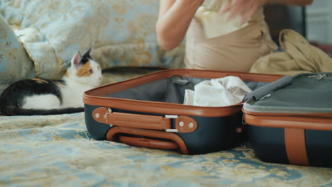 Woman-Folds-Clothes-In-A-Suitcase-A-Kitten-Sits-Next-To-And-Watches-Her