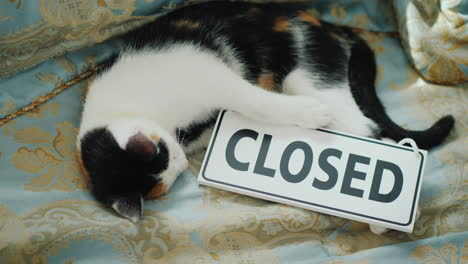The-Cat-Is-Lying-On-The-Bed-With-A-Sign-Closed-Get-Out-Of-Business-Concept