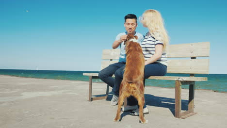 Active-Young-Couple-Playing-With-A-Dog-Sit-On-A-Bench-Against-The-Sea-Rest-With-Your-Pet-Concept
