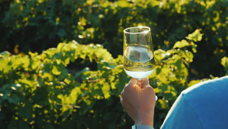 A-Man-Holds-A-Glass-Of-White-Wine-Near-The-Vineyard-Rear-View-Over-The-Shoulder