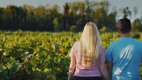 Young-Couple-Walking-In-The-Vineyard-Traveling-To-Places-Of-Wine-Production-4k-Video