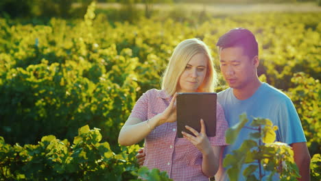 A-Pair-Of-Farmers-Use-The-Tablet-On-The-Background-Of-The-Vineyard-Beautiful-Light-In-Front-Of-The-S
