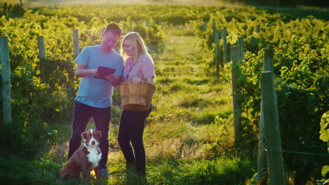 Couple-Of-Farmers-Stands-At-The-Vineyard-Enjoys-The-Tablet-Next-To-Them-Is-Their-Dog