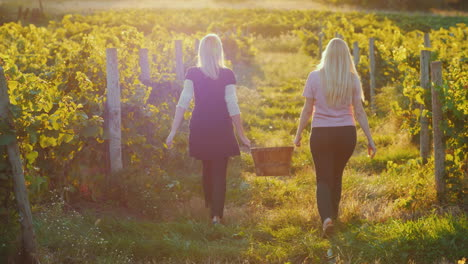Two-Young-Women-Carry-A-Basket-Of-Grapes-Go-Between-The-Rows-Of-Vineyards-At-Sunset-Harvesting-And-O