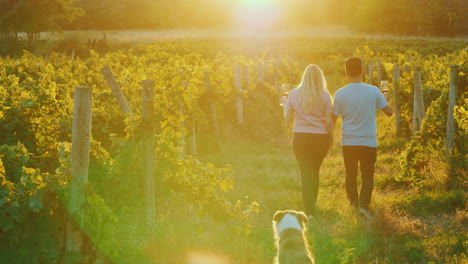 Young-Couple-With-Glasses-Of-Wine-In-Their-Hands-Walking-Through-The-Vineyard-Their-Dog-Runs-After-T