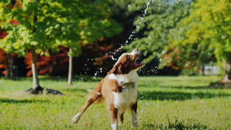 Funny-Dog-Playing-With-A-Garden-Hose-Play-With-The-Owner-And-Have-Fun-Together