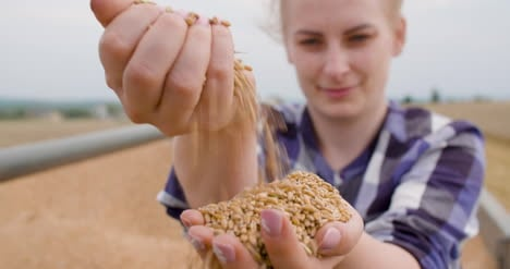 Wheat-Grains-In-Farmer-Hands-Agriculture-8