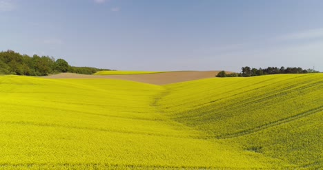Scenic-View-Of-Canola-Field-Against-Sky-1