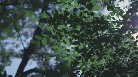 Light-Flashing-Through-Tree-Leaves-2