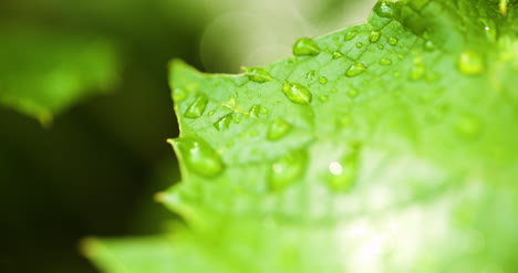 Water-Drops-On-Leaf-Surface-19