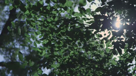 Light-Flashing-Through-Tree-Leaves-3
