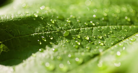 Water-Drops-On-Leaf-Surface-20