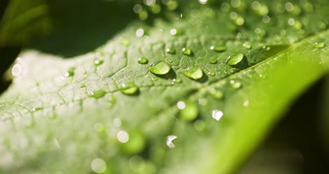 Water-Drops-On-Leaf-Surface-22