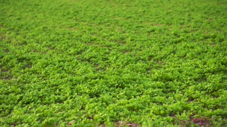 Fields-With-Various-Types-Of-Agriculture-4K-1
