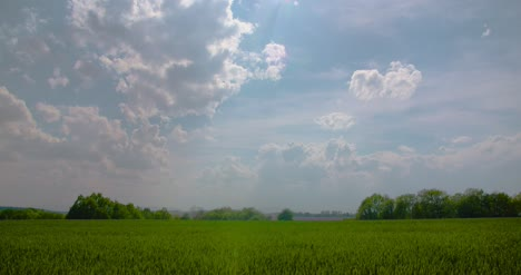 Scenic-View-Of-Wheat-Field-Against-Sky-2
